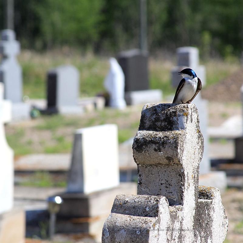 mp bird onna gravestone