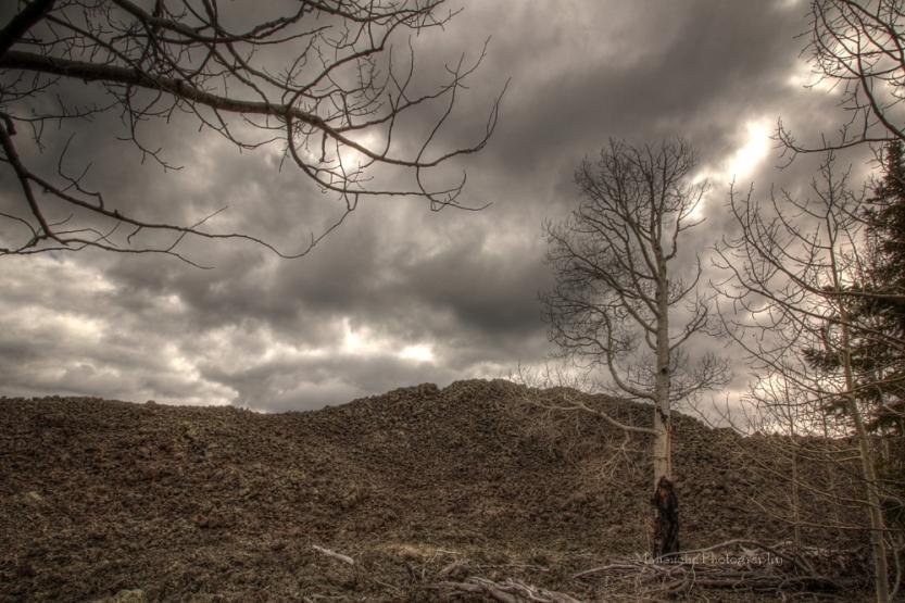 mp dixie birches.jpg